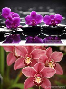 Скачать красивые фото цветов в высоком качестве   сборка (22)