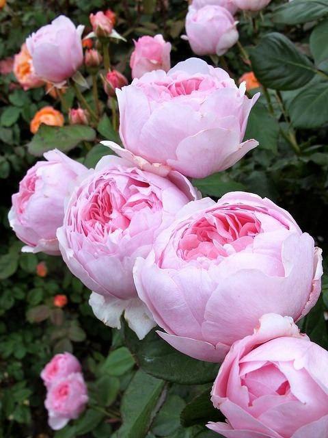 Скачать красивые фото цветов в высоком качестве   сборка (24)
