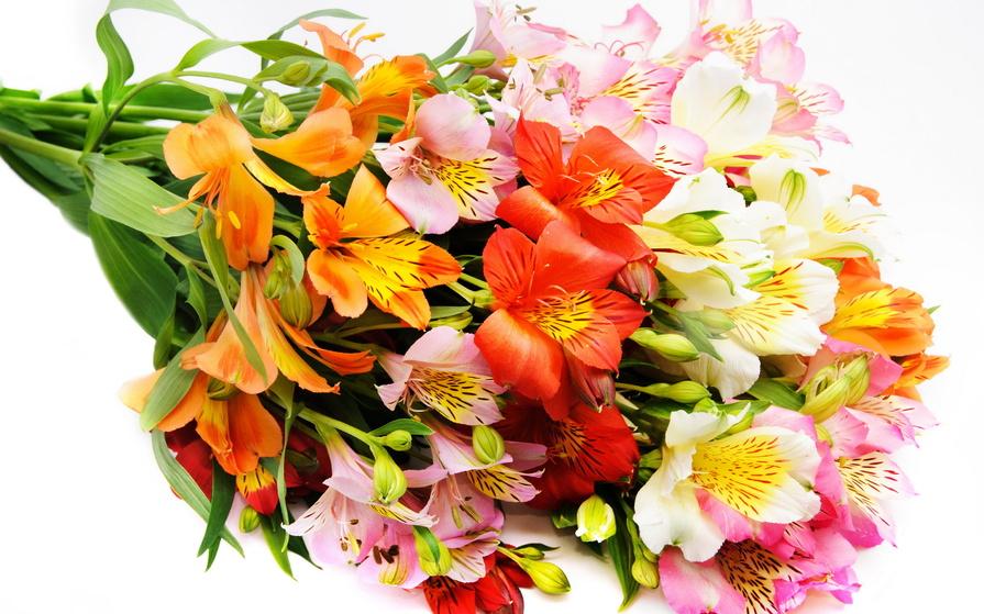 Скачать красивые фото цветов в высоком качестве   сборка (25)