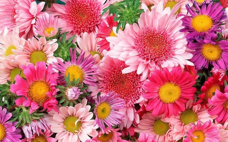 Скачать красивые фото цветов в высоком качестве   сборка (4)