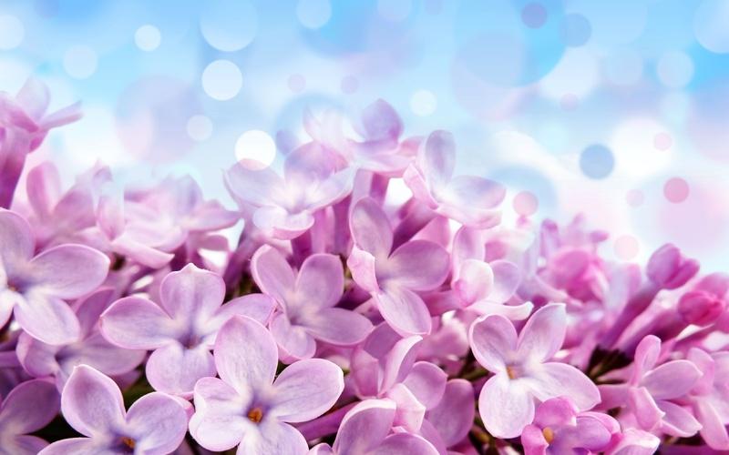 Скачать красивые фото цветов в высоком качестве   сборка (8)