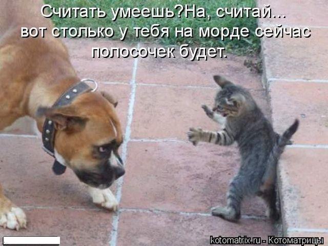 Скачать фото злых собак   подборка 024