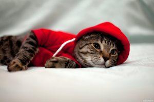 Скачать фото на аву с котами в ВК   подборка аватарок (42)