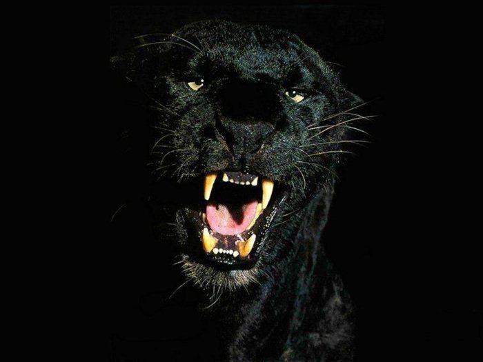 Скачать фото оскал волка бесплатно   подборка 007