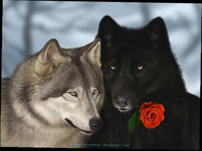 Скачать фото оскал волка бесплатно   подборка 014
