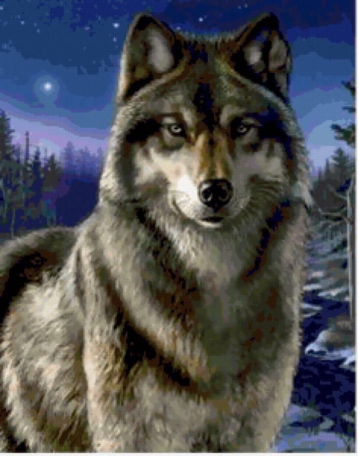 Скачать фото оскал волка бесплатно   подборка 015