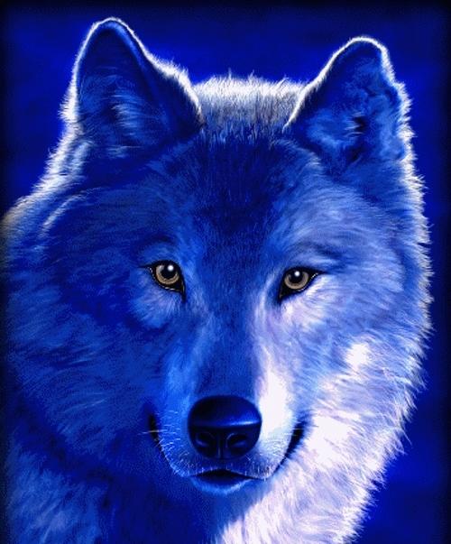 Скачать фото оскал волка бесплатно   подборка 023