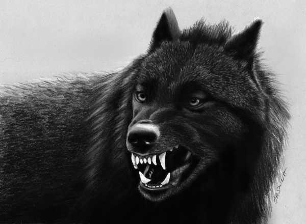 Скачать фото оскал волка бесплатно   подборка 028
