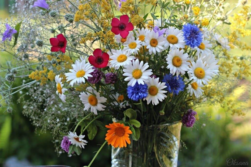 букет очень красивых полевых цветов фото