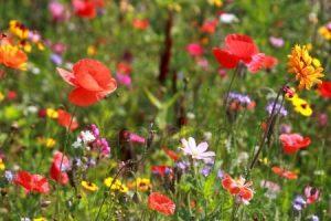 Скачать фото полевых цветов   очень красивые 029