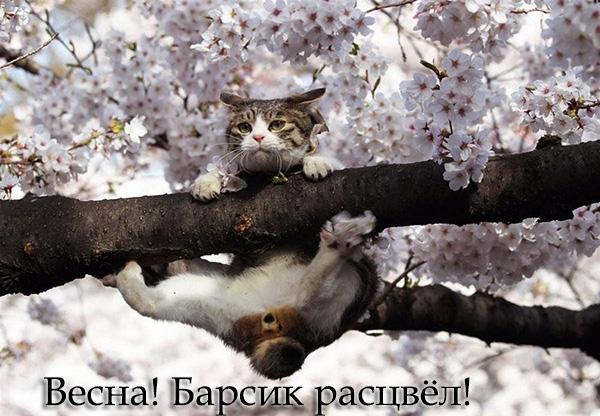 Смешные картинки про весну   подборка015