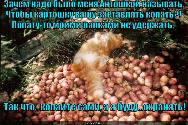 погоня веселые картинки про копание картошки остального мира государство