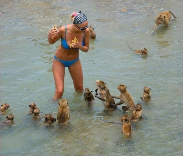 Смешные картинки про пляж   смотреть бесплатно 002