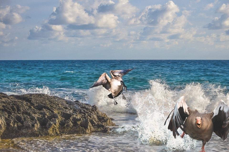 Смешные картинки про пляж   смотреть бесплатно 012