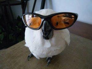 Смешные картинки про попугаев 025
