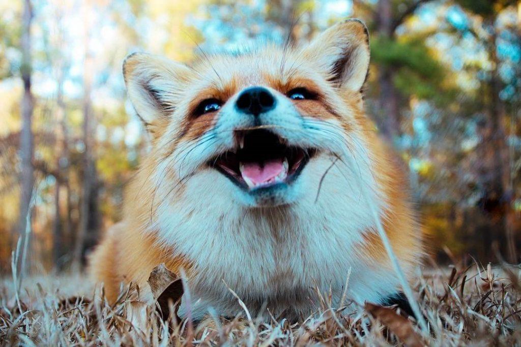 ушли жизни, прикольные фото с лисичками фрейзер рассказал