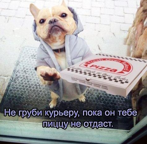 Смешные картинки с пиццей   подборка 005