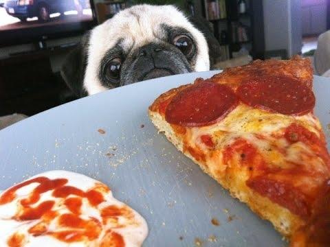 Смешные картинки с пиццей   подборка 022
