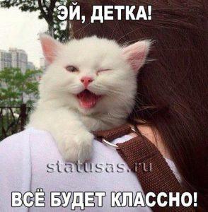 Смешные кошки с надписями   прикольные фото (24)
