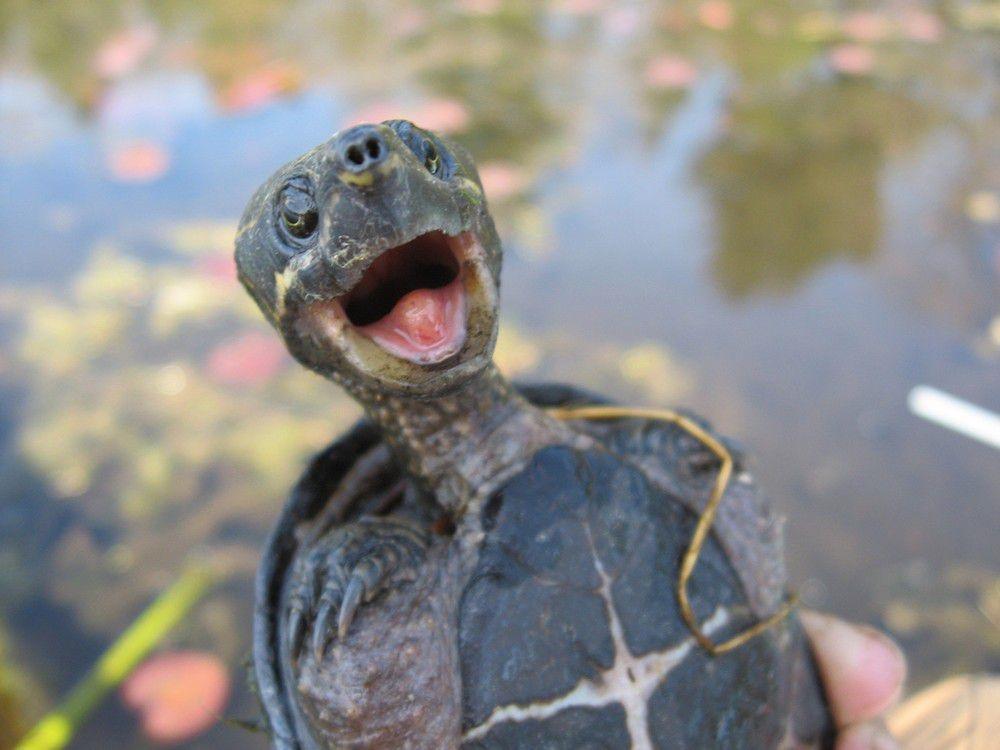 Смешная картинка про черепах