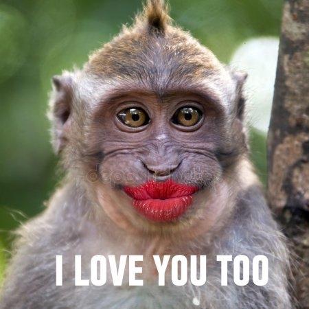Смешные обезьяны картинки и фото 020