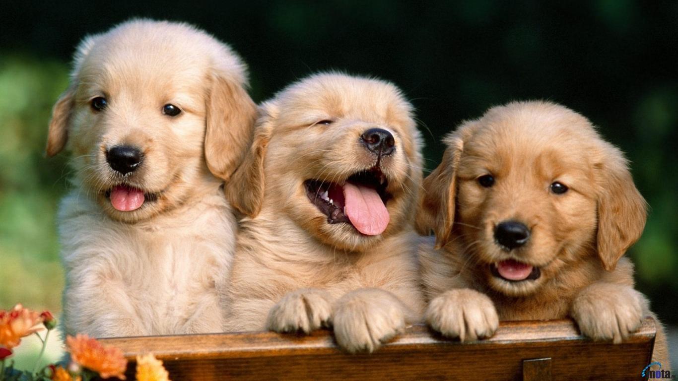 Смешные собаки на рабочий стол   подборка (14)