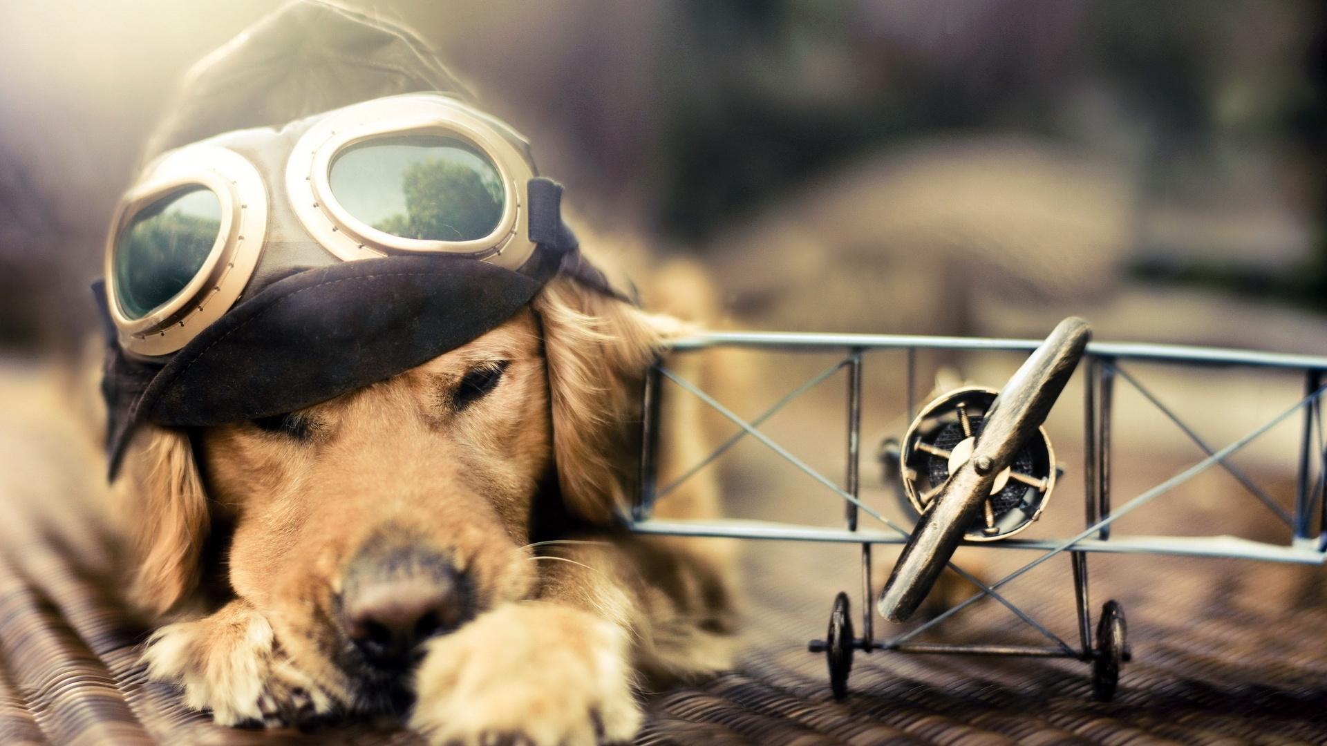 Смешные собаки на рабочий стол   подборка (17)
