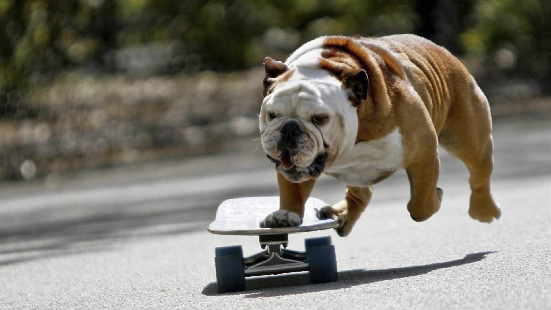 Смешные собаки на рабочий стол   подборка (23)