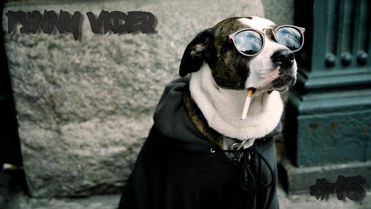 Смешные собаки на рабочий стол   подборка (4)