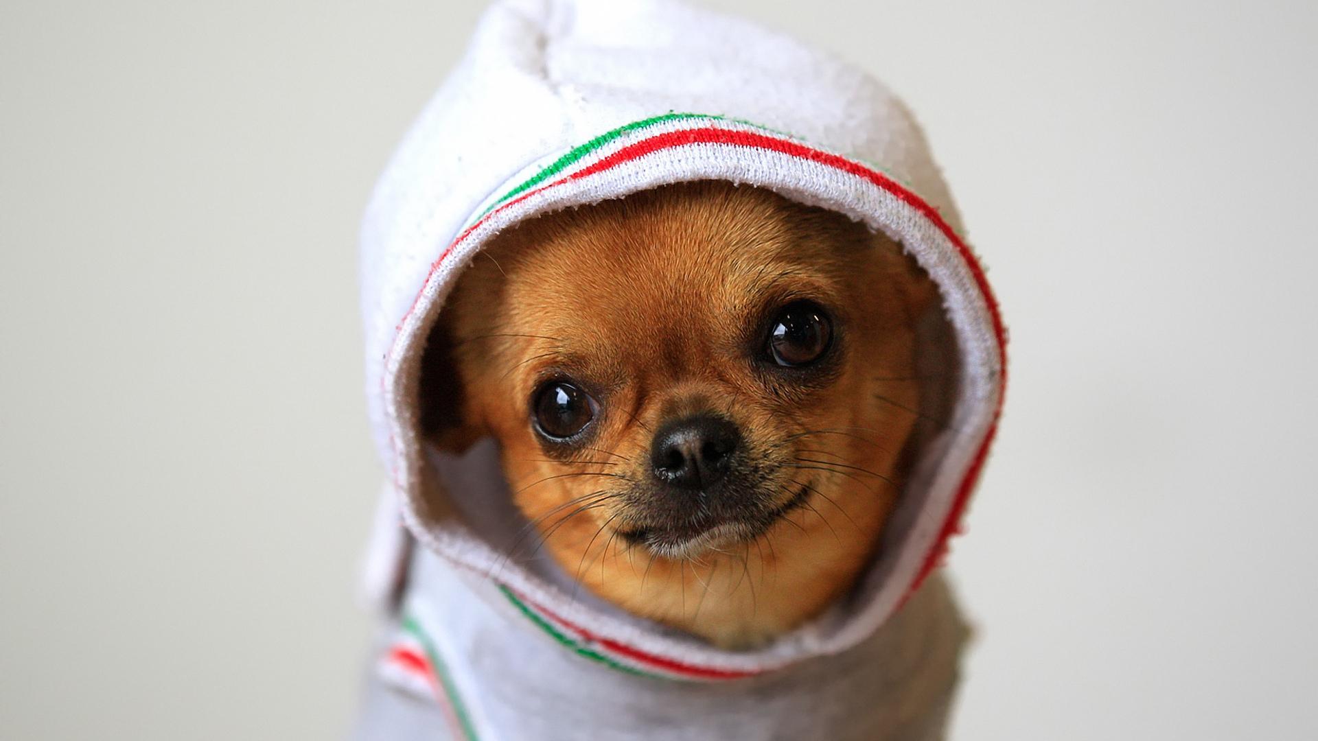Смешные собаки на рабочий стол   подборка (8)