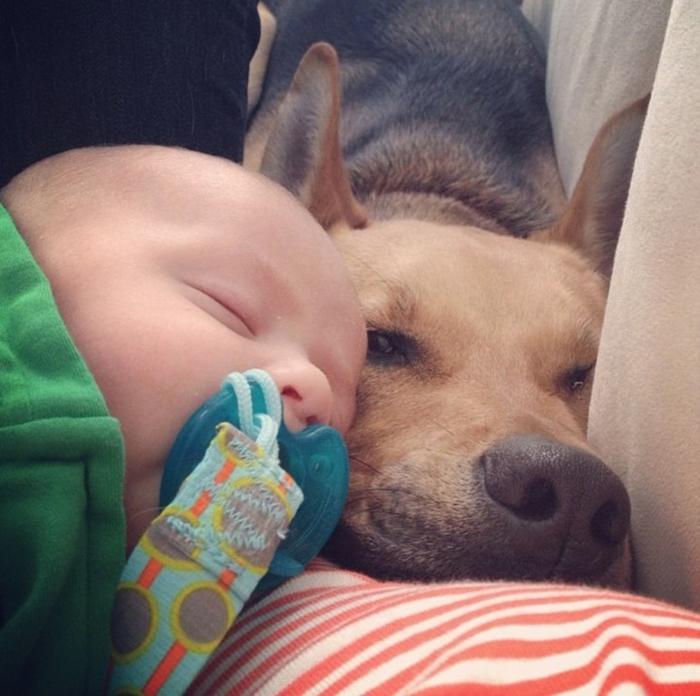 Смешные фото с собаками и детьми