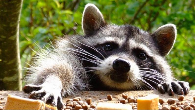 Смешные фото животных домашних   подборка (10)
