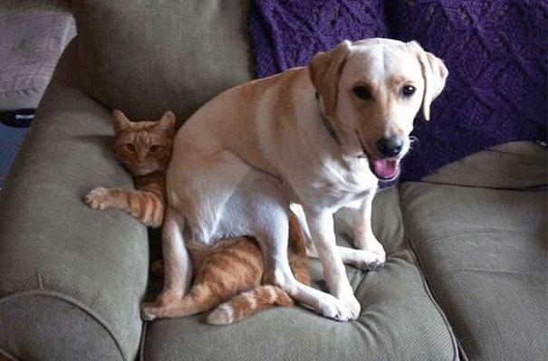 Смешные фото животных домашних   подборка (13)