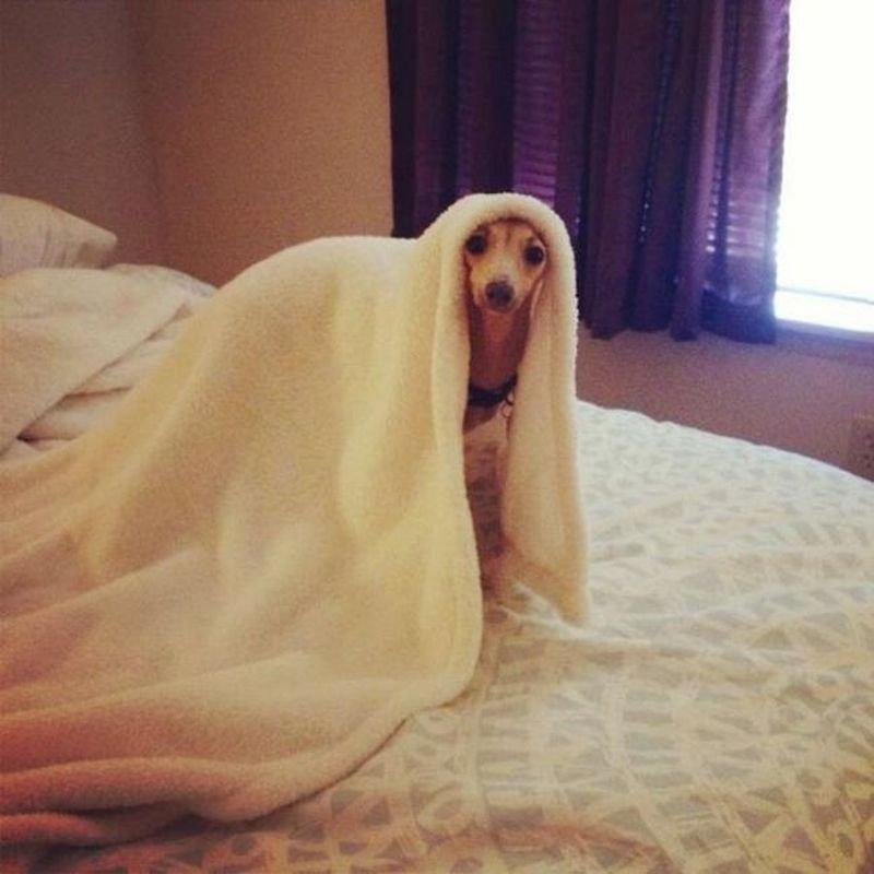 Смешные фото животных домашних   подборка (2)