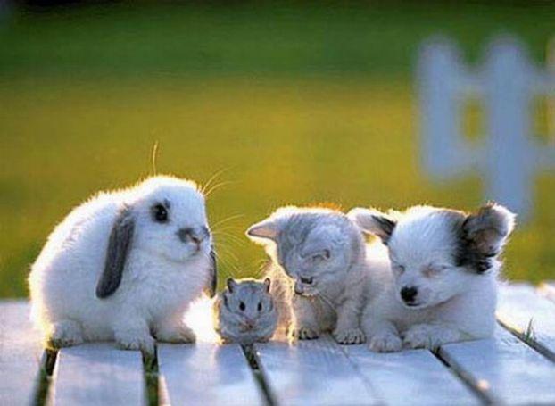 Смешные фото животных домашних   подборка (22)