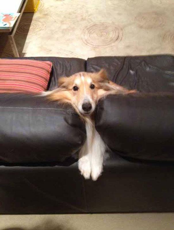Смешные фото животных домашних   подборка (23)