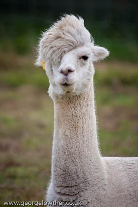 Смешные фото животных домашних   подборка (25)