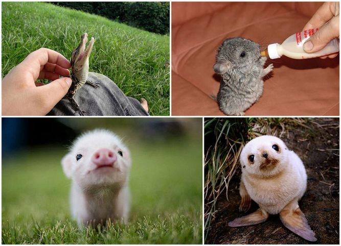 Смешные фото животных домашних   подборка (4)