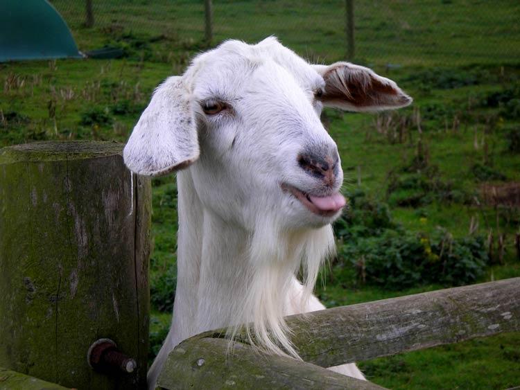 Смешные фото животных домашних   подборка (9)
