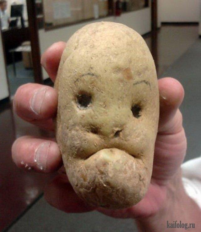 Днем рождения, смешная картинка про картошку