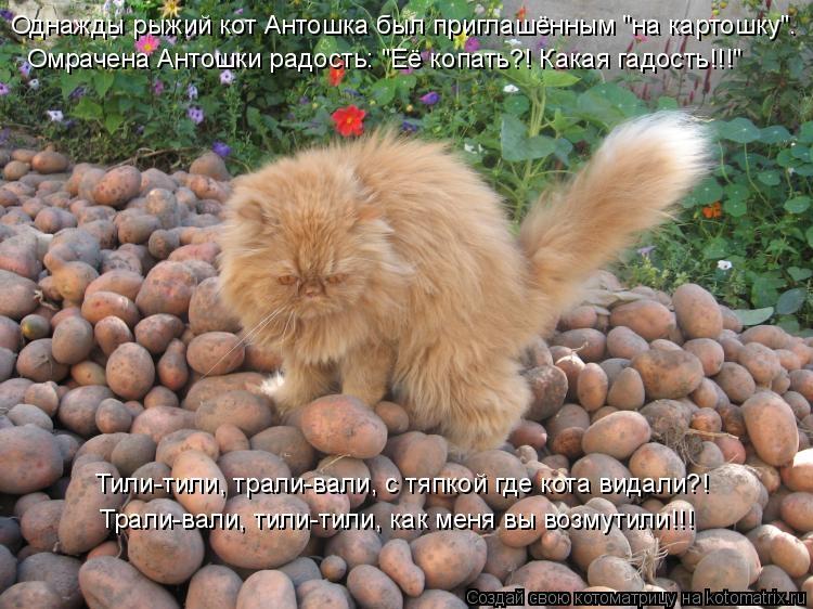 Смешные фото про картошку   очень веселые028