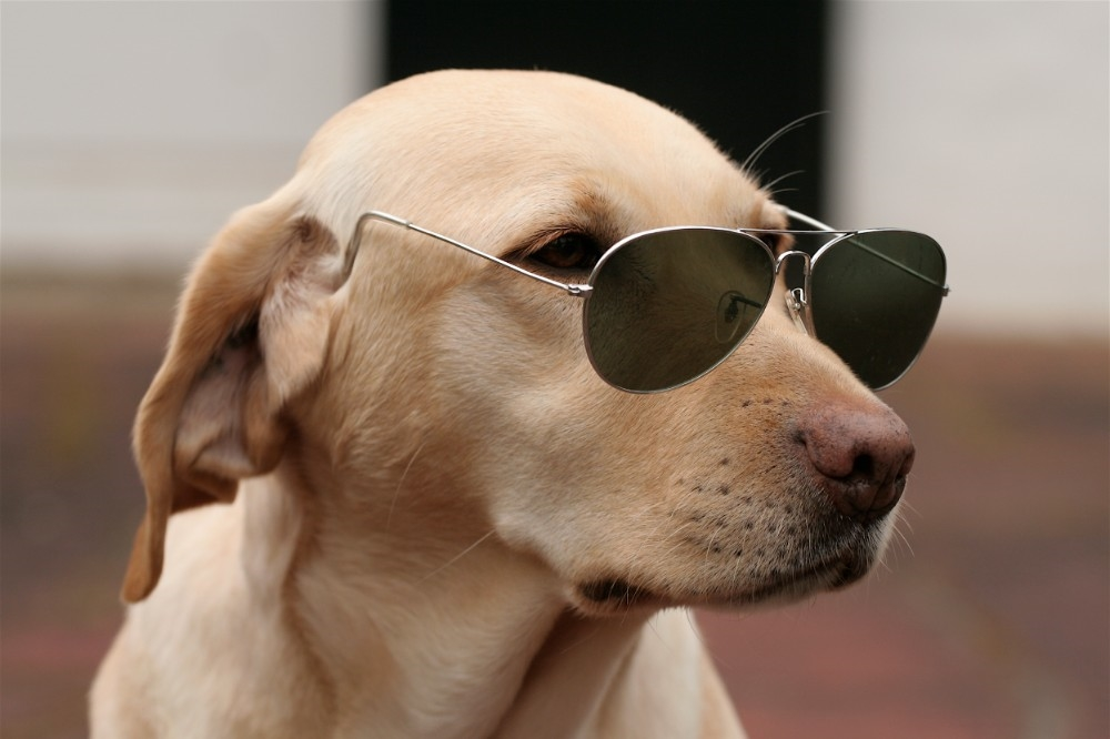Прикольные картинки с животными-собаки, бассейном
