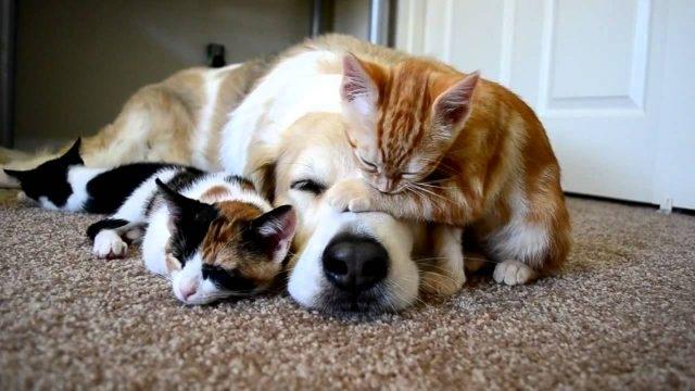 Собаки и кошки рисунки - сборка картинок