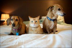 Собаки и кошки рисунки   сборка картинок 024