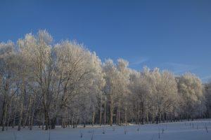 Солнечное морозное утро картинки 024