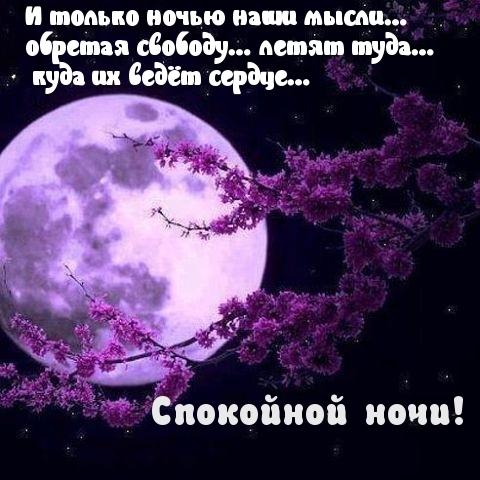 Спокойной ночи дорогому картинки и открытки002