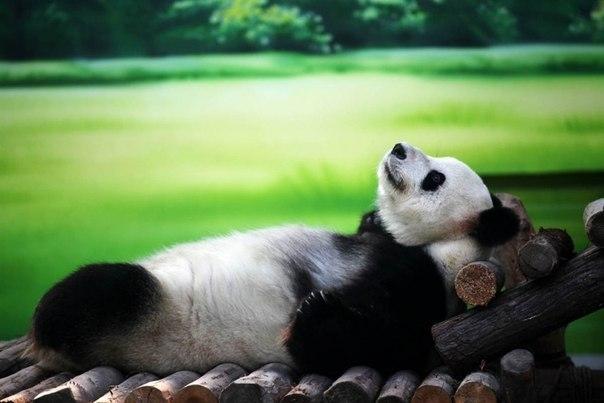 Спокойной ночи картинка сыну   очень милая020