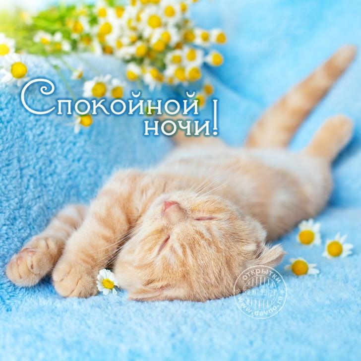 Открытки днем, картинки спокойной ночи милый котик