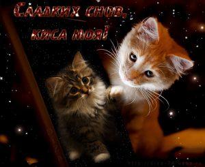 Спокойной ночи котенок мой любимый   картинки 029