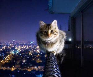 Спокойной ночи кошечка картинки 028